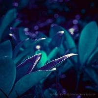 Plants01 by petercui