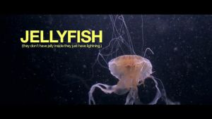 Jelly+Fish by Kayreigh
