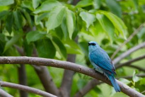 Birdly Blues by furstripe