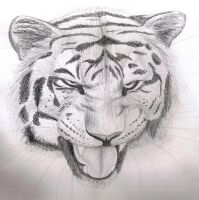 Pencil sketch - Tiger by Finchwing