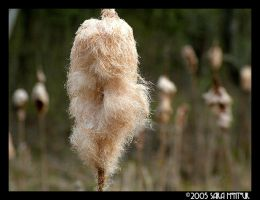 Cat Tails by b4refo0tmu5ic