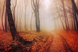 Autumn Walk LV. by realityDream