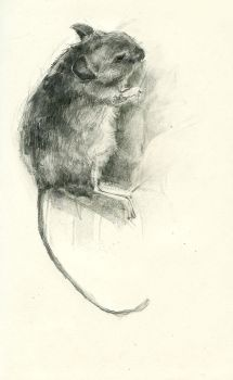 dead field mouse by frozenfinch