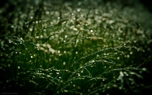 Gloomy Grass by nprkr