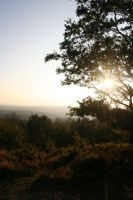 Crooksbury Hill, Surrey. by PinkPolo