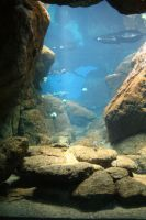 Aquarium Stock 32 by Malleni-Stock