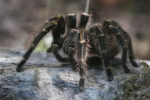 Spider Stock 01 by Malleni-Stock