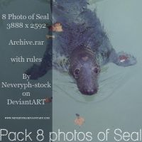 Pack 8 images of Seal by Neveryph-stock