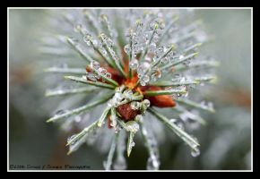 Needles and Dewdrops II by average-jeau