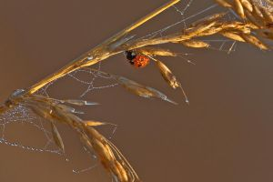 wet ladybird by Siilver1984