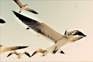 The Birds by MikeRossPhotography