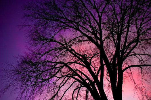 Tree Silhouette by Jmsmith802