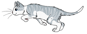 ThunderClan - Ivypool by WildpathOfShadowClan