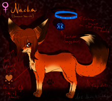 Nacha Ref by ScottishRedWolf