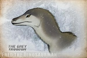 The Grey Troodon by FredtheDinosaurman