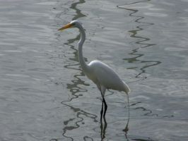 the great egret by kaptivkre8ivity