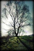The tree of Eywa. by Canon-Ash