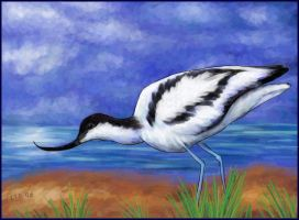 Avocet by starmist