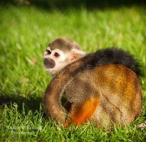 Squirrel Monkey by AEisnor