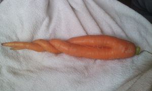 Unicorn carrot by Jasentha