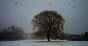 The willow tree outside my house by Gavynne