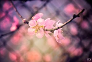 When spring comes.... by HoangMinh96