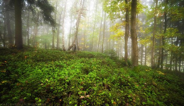 Forest Symphony by MarcoHeisler