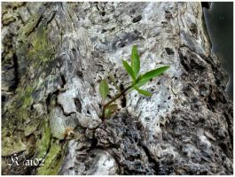 plant on a tree by pusakal1402