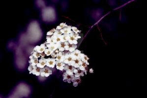 Flower power by Bartistictouch