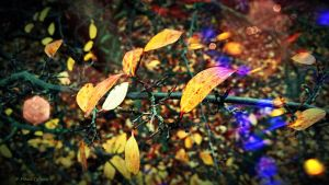 Magic of colorful autumn by Mishelangello
