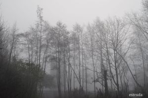 A Foggy Morning 1 by Estruda