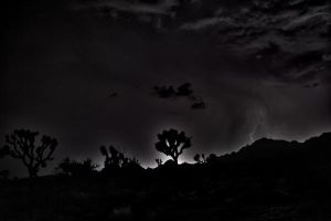 Joshua Tree with Thunders by leographics