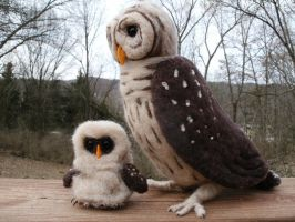 Needle Felted Barred Owl and Chick by JessieDockins