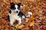 suki with leaves by photom17
