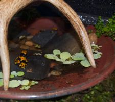 Poison Dart Frog Pond by Phoenix-Cry