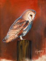 Barn Owl by swimdude002