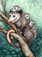 Opossum Totem Card by XianJaguar