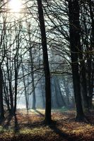 Forest in the Morning by Caillean-Photography