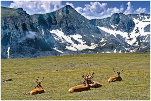 Alpine Meadow Sun Tan Party by kkart