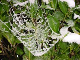 Frosted Web by RT912