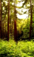 Summer in the Forest by sazzyarmani