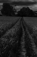 The Cotswold Way III by younghappy
