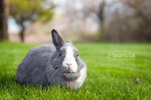 Grey Little Bunny by breanna-rae
