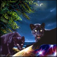Night of the Panther by oomu