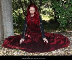 Rose Red8 by faestock