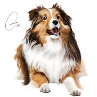Collie by ArtWarrior25