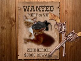 wanted cute cats by sancha310sp