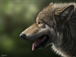 Wolf portrait 2011 by KatrineH