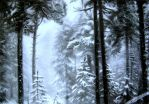 Born in the forest spruce. by Vladimir12908