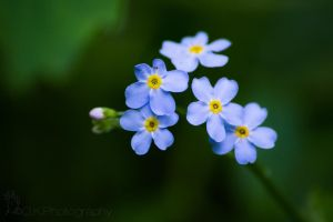 Baby blue by OlegKPhotography